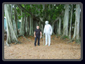 ME T.EDISON AND THE BANYAN TREE